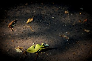 rsz_september_3_2012_104