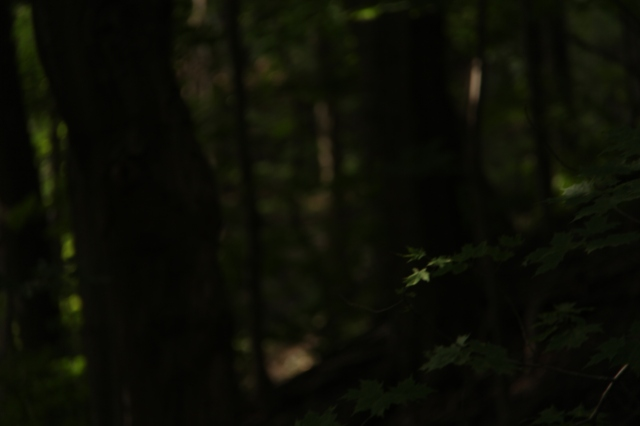 August 16, 2014 ~Charles Sauriol Conservation Area 086